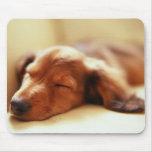 El dormir del Dachshund Alfombrilla De Ratón