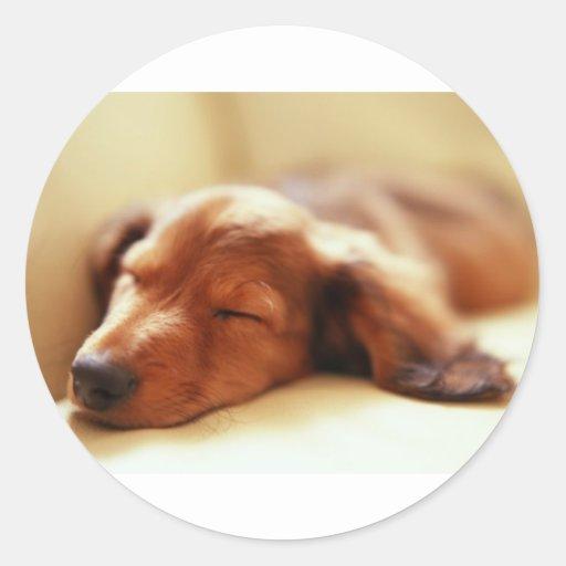 El dormir del Dachshund Pegatina Redonda
