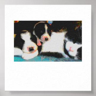el dormir del gato y de 2 perritos póster