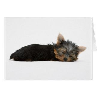 El dormir del perrito de Yorkie Tarjeta De Felicitación