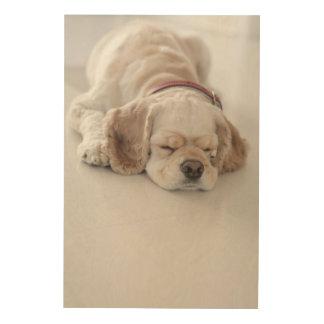 El dormir del perro de cocker spaniel impresiones en madera