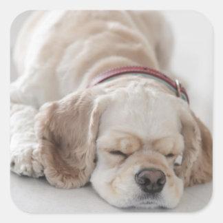 El dormir del perro de cocker spaniel pegatina cuadrada