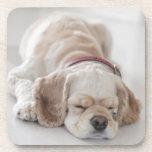 El dormir del perro de cocker spaniel posavasos de bebida