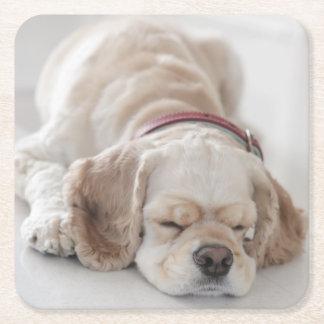 El dormir del perro de cocker spaniel posavasos de cartón cuadrado