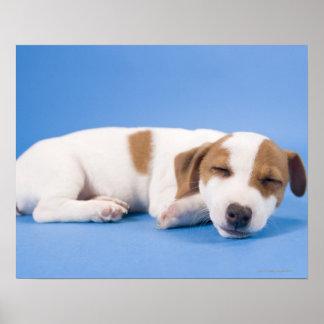 El dormir del perro póster