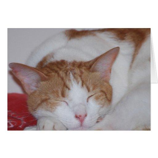 el dormir dexter tarjeta de felicitación