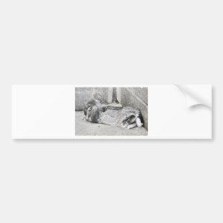 El dormir espigado del conejo del Lop Pegatina De Parachoque
