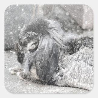 El dormir espigado del conejo del Lop Colcomanias Cuadradas Personalizadas