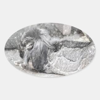 El dormir espigado del conejo del Lop Pegatinas Óval Personalizadas