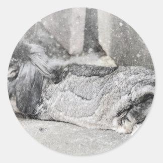El dormir espigado del conejo del Lop Etiquetas Redondas