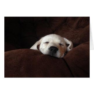 El dormir Gracie Tarjeta De Felicitación