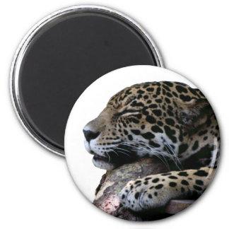 El dormir Jaguar ningún fondo Imán Redondo 5 Cm