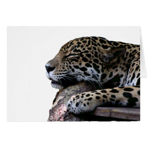 El dormir Jaguar ningún fondo Tarjeta De Felicitación