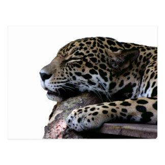 El dormir Jaguar ningún fondo Tarjeta Postal