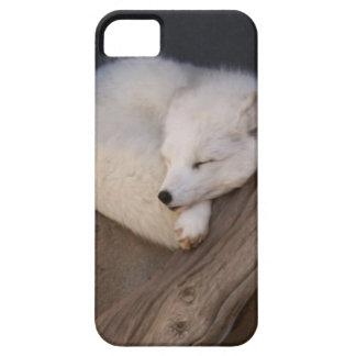 El dormir lindo del Fox ártico iPhone 5 Case-Mate Carcasas