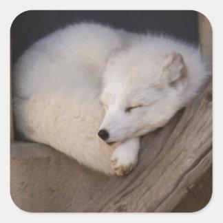 El dormir lindo del Fox ártico Pegatina Cuadradas