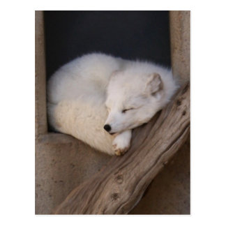 El dormir lindo del Fox ártico Tarjeta Postal