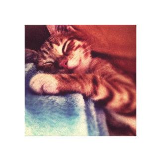 El dormir lindo del gatito lona estirada galerias