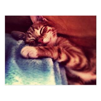 El dormir lindo del gatito postales