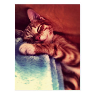 El dormir lindo del gatito tarjetas postales