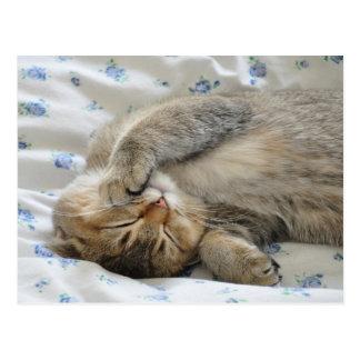 El dormir lindo del kittin postales