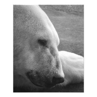 El dormir Polarbear Flyer A Todo Color