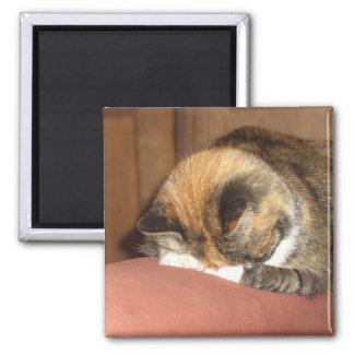 """El dormir """"rojo"""" del gato en la tos imán cuadrado"""