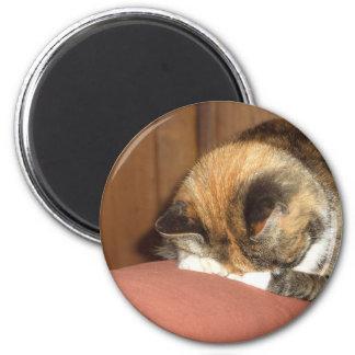 """El dormir """"rojo"""" del gato en la tos imán redondo 5 cm"""