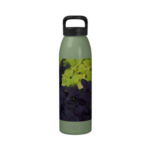 el Dos-tono deja la botella de agua