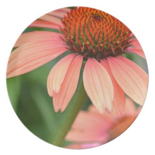 El Echinacea del melocotón florece la placa Platos Para Fiestas