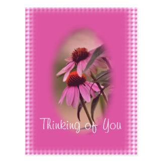 El Echinacea y la postal de la sirsaca