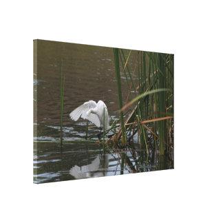El Egret nevado de la charca envolvió la impresión Lona Envuelta Para Galerías
