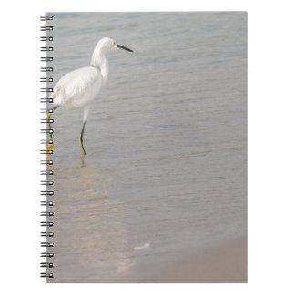 El Egret nevado Libreta