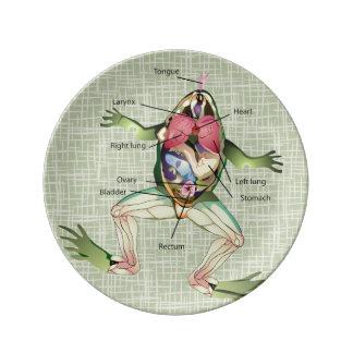 El ejemplo de la anatomía de la rana platos de cerámica