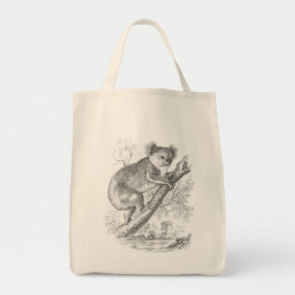 El ejemplo del oso de koala de los 1800s del