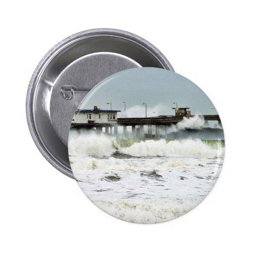 El EL Nino agita los cafés de las gaviotas del océ Pin