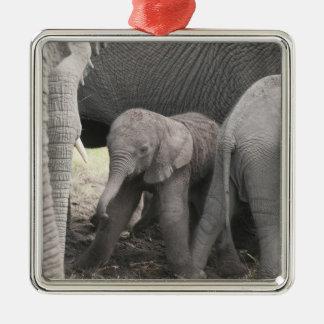 El elefante del bebé es derecho y tembloroso ornamentos de reyes