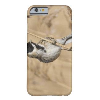El empavesado de lámina (schoeniclus del Emberiza) Funda De iPhone 6 Barely There