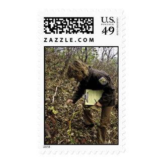 El empleado examina hojea encuesta sello