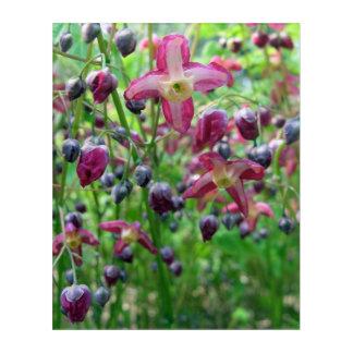El Epimedium florece (las alas de hadas) arte de