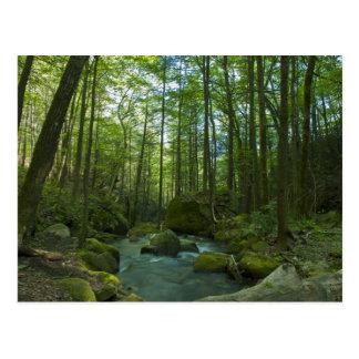 El escape del bosque tarjeta postal