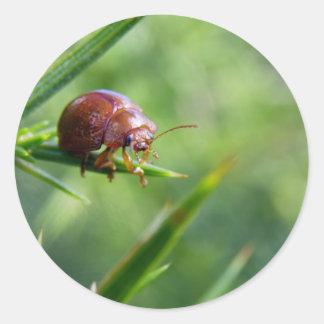 El escarabajo agita hola pegatina redonda