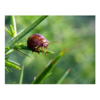 El escarabajo agita hola tarjetas postales