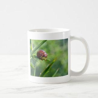El escarabajo agita hola taza