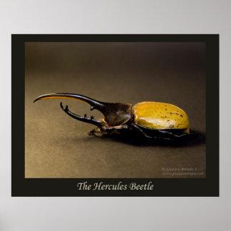 El escarabajo de Hércules Impresiones