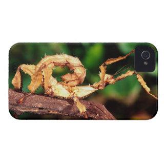 El espectro de Macleay (insecto de palillo de Funda Para iPhone 4