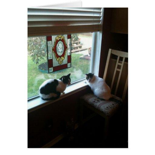 El esperar de los gatos tarjeta de felicitación