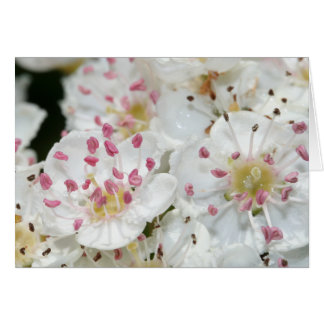El espino florece la tarjeta de felicitación