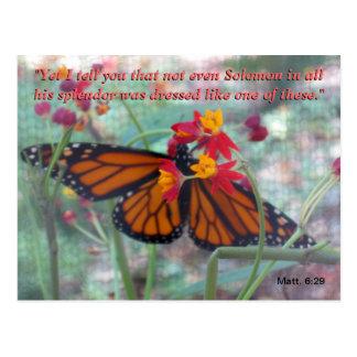 El esplendor de la mariposa tarjeta postal