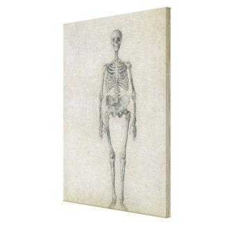 El esqueleto humano, visión anterior, desde la ser impresión en lona estirada